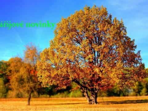 tree 99852 1280 kopie 4